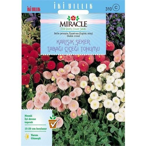Miracle Tohum Karışık Şeker Tabağı(Çayır Papatyası) Çiçeği Tohumu(600 Tohum)