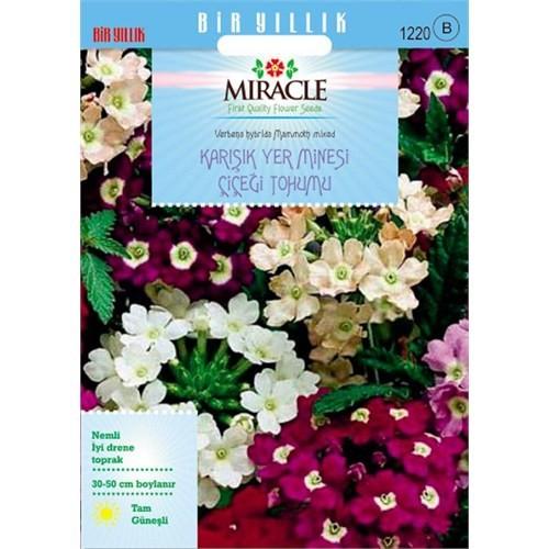 Miracle Tohum Karışık Renkli Yer Minesi (Verbena) Çiçeği Tohumu (100 Tohum)