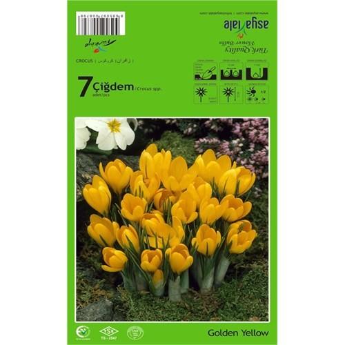 Plantistanbul Golden Yellow Çiğdem Soğanı Paketli