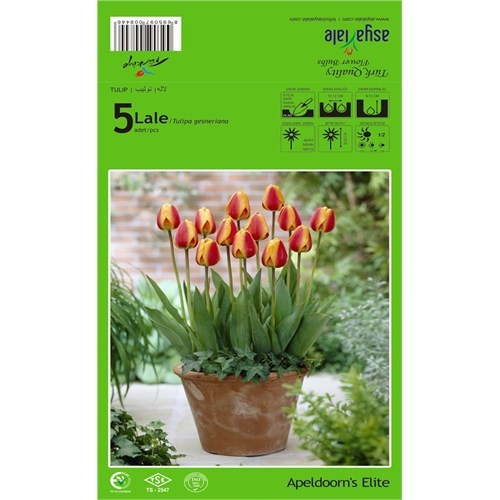 Plantistanbul Apeldoorn's Elite Lale Soğanı Paketli