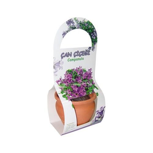 Hediyelik Toprak Saksılı Çan Çiçeği Ekim Kiti