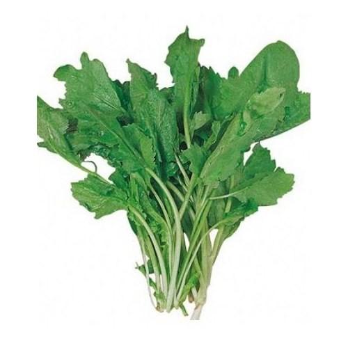 Plantistanbul Tere Geniş Yaprak Tohumu Paket 25 Gr.
