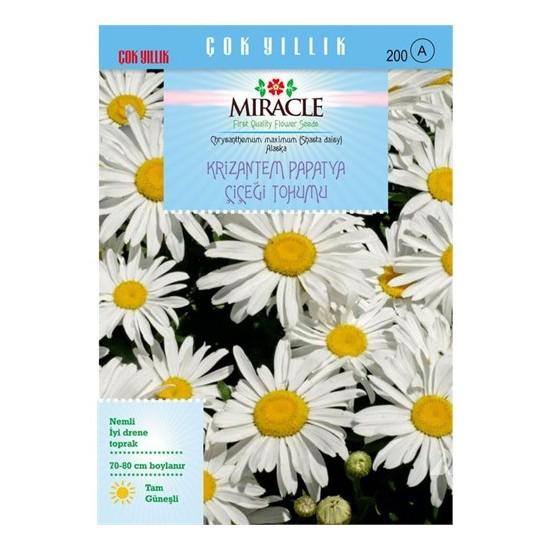 Miracle Tohum Maximum Alaska Krizantem Papatya Çiçeği Tohumu (300 Tohum)