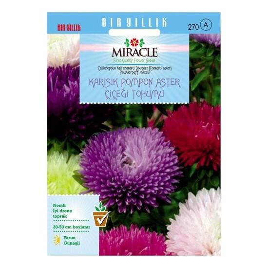 Miracle Tohum Karışık Pompon Aster Papatya Çiçeği Tohumu (360 Tohum)