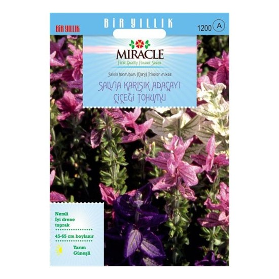 Miracle Tohum Salvia Horminum Karışık Renkli Adaçayı Çiçeği Tohumu (350 Tohum)