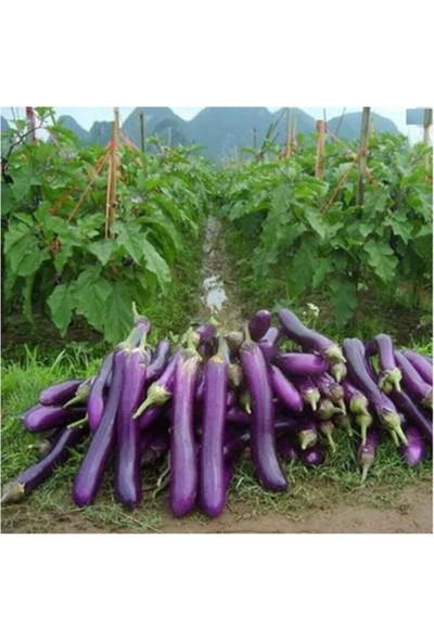 Tohum Dünyam Süper Paket 125 Adet Tohum Ithal Nadir Dev Kemer Patlıcan Tohumu