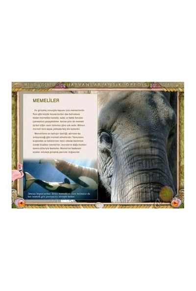 Eurosoft Hayvanlar Dünyası