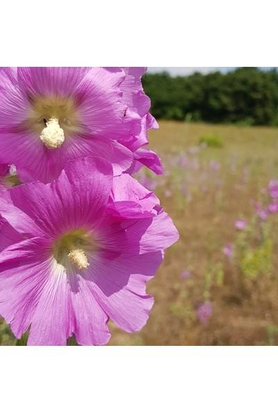 Murat Tohumculuk Pembe Hatmi Çiçeği Tohumu Gülhatmi Çiçeği Tohumu 10 Tohum