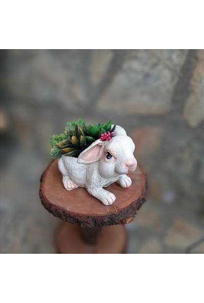 Bulut Tavşan Saksı Beyaz