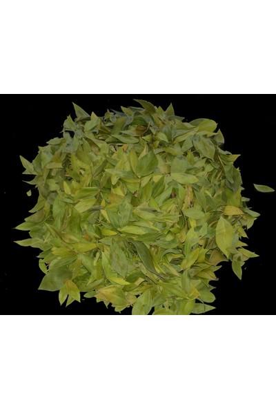Ayvalık Baharat Mersin Yaprağı 100 gr