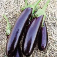 Arzuman Aydın Siyahı Patlıcan 10 Gram