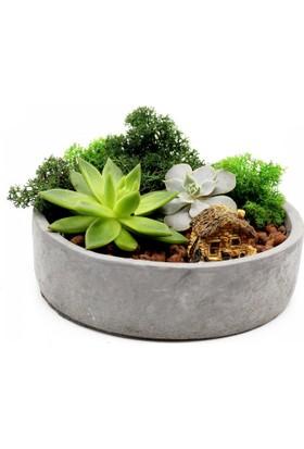 Greenmall Küçük Orman Mini Bahçe
