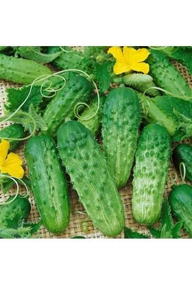 Arzuman Kornişon Salatalık 100 Adet