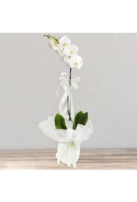 LezzetliÇiçek WhitePure - Beyaz Orkide Çiçeği