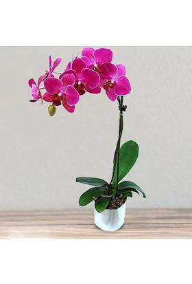 LezzetliÇiçek PinkLolly - Fuşya Orkide Çiçeği