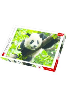 Trefl 500 Giant Panda