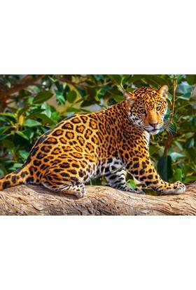 Castorland 260 Parça Küçük Jaguar Çocuk Puzzle