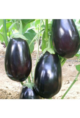 Yüksel Tohum Karagül Patlıcan Tohumu 25'li Paket