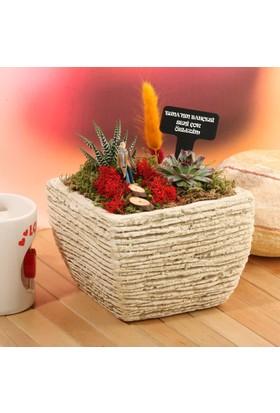 Hediye Sepeti Kişiye Özel Erkeğe Hediye Minyatür Bahçe