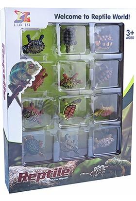 Simba Tortoise Kaplumbağalar 12'li Set