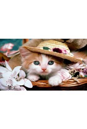 Mats Dekoratif Paspas 40X70 Şapkalı Kedi