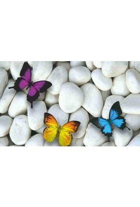 Mats Dekoratif Paspas 40X70 Beyaz Taş Üstünde Kelebekler