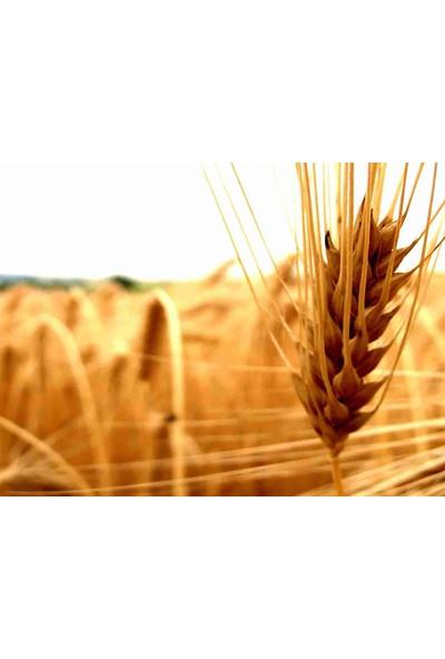 Organik Tarım Eğitimi (Uluslararası Geçerli Sertifikalı)