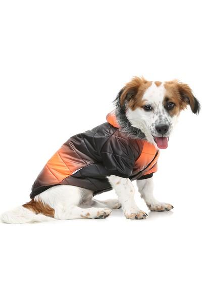 Dogi & Dog Oranj Black Puf Mont Köpek Yağmurluğu