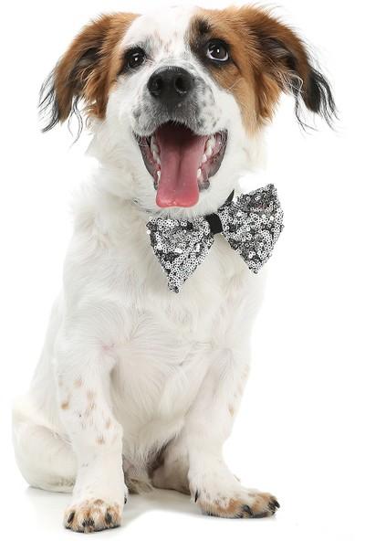 Dogi & Dog Füme Pullu