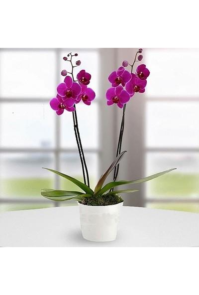 LezzetliÇiçek DoubleFusia - 2 Dallı Orkide Çiçeği