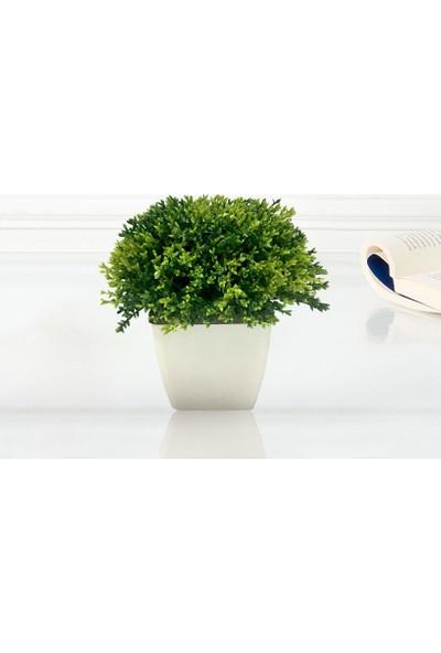 Yeşil Saksıda Bonus Çiçek