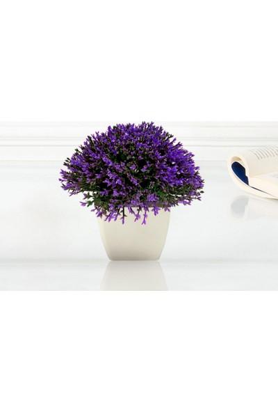Mor Saksıda Bonus Çiçek