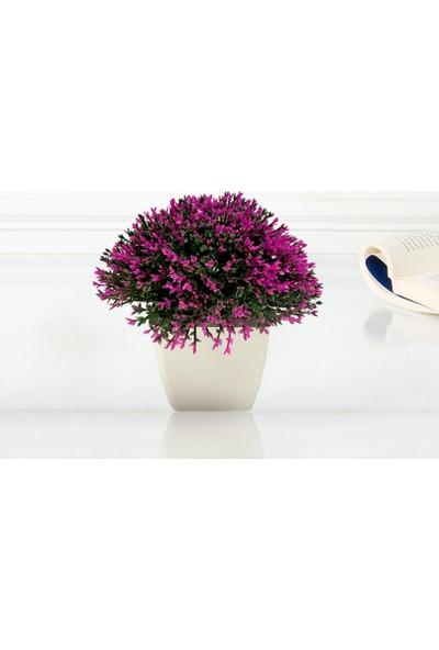 Fuşya Saksıda Bonus Çiçek