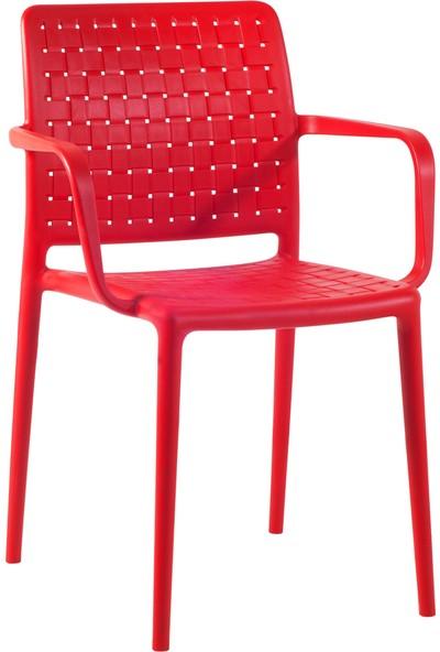 Papatya Tüm Renkler Fame K Çok Amaçlı Sandalye