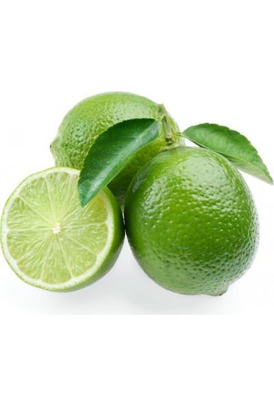 Berke Fidancılık Dikensiz Mexican Lime Limon Fidanı Nadir Çeşit 5 Yaşlı Tüplü