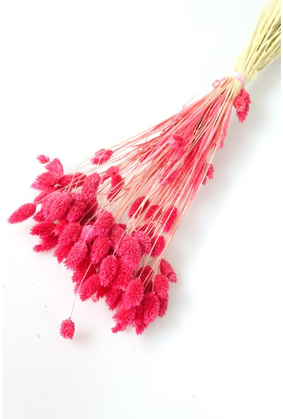 Yapay Çiçek Deposu Kuru Çiçek Palaris Kuş Otu Pembe