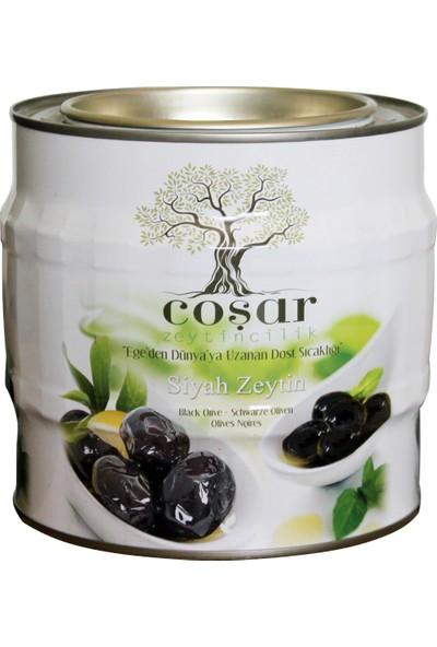 Coşar Zeytin 321-350 (Hususi) 2 KG Siyah Yağlı Sele