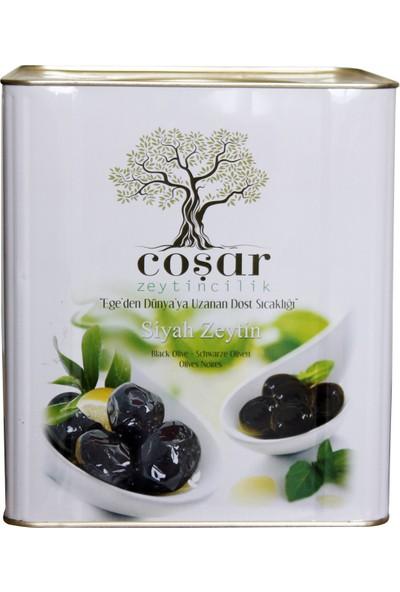 Coşar Zeytin 231-260 (Jumbo) 10 KG Siyah Yağlı Sele