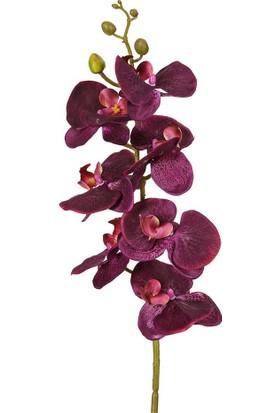 Vitale Afrika Orkidesi Dal Bordo