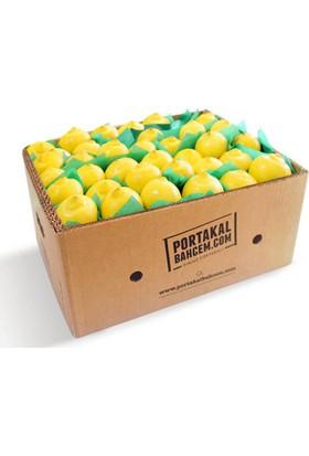 Portakalbahcem Kokulu Limon 5 kg