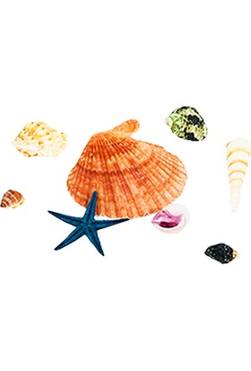 Bigpratic Teraryum Malzemesi Karışık Deniz Kabuğu (8'Li Paket)