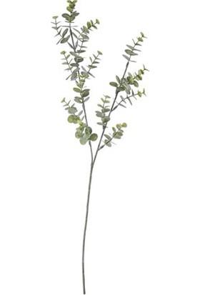 Piyop Eucalyptus 75 cm.