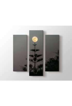 Dekorme Ağaç Dolunay 3 Parçalı Kanvas Tablo