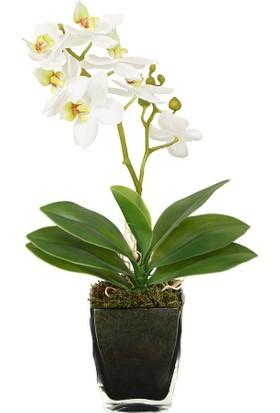 Altıncı Cadde Beyaz Orkide Aranjmanlı Gri Vazo
