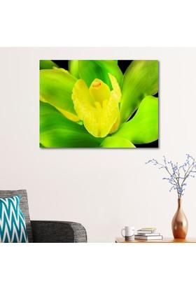 Çerçevelet Orkide 30 x 25 Cm Kanvas Tablo