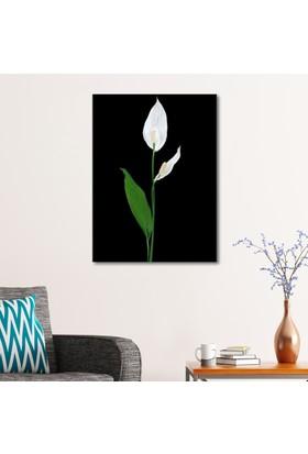 Çerçevelet Barış Çiçeği 25 x 30 Cm Kanvas Tablo