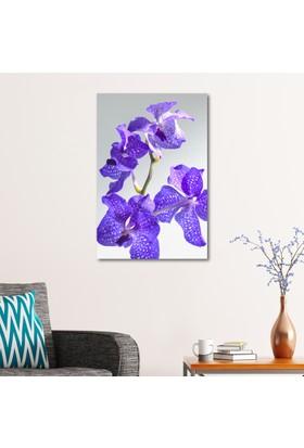 Çerçevelet Orkide Yaprakları 25 x 35 Cm Kanvas Tablo