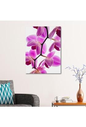 Çerçevelet Mor Orkide 25 x 35 Cm Kanvas Tablo