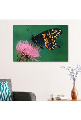 Çerçevelet Kelebek 35 x 25 Cm Kanvas Tablo