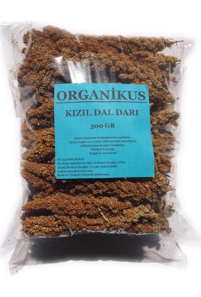 Organikus Kızıl Dal Darı Kg